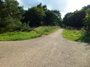 <p>De grotendeels semiverharde paden ...</p>